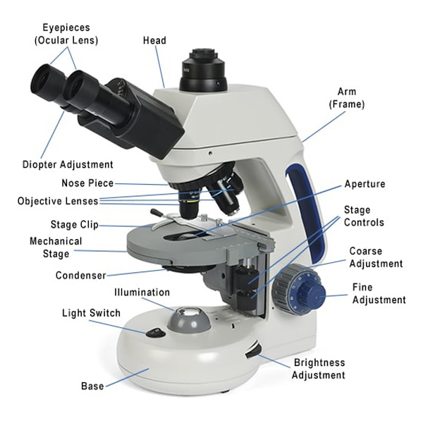 Labeled Parts of a Compound Microscope