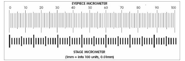 Micrometer Calibration - New York Microscope Co