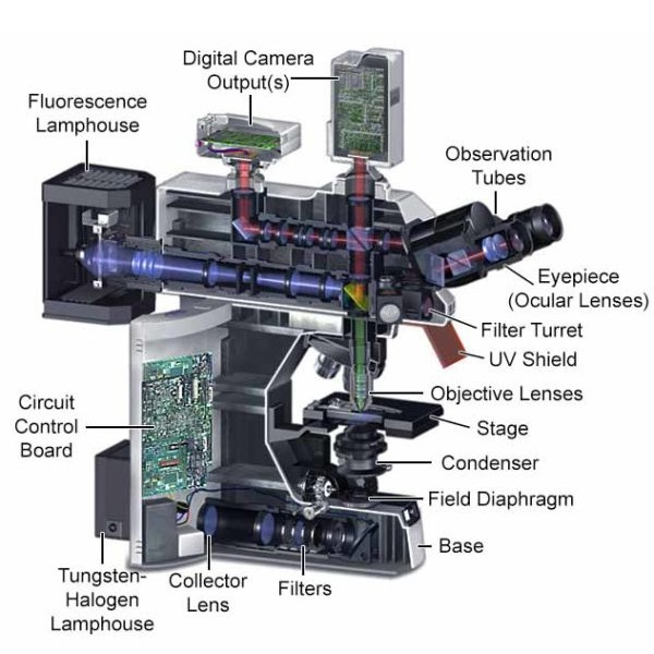 Parts of a fluorescence microscope